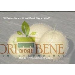 Frutto di Sechium edule ( zucchina spinosa )