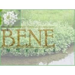 Semi di crescione delle fontane ( Nasturtium Officinalis )