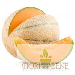 Semi di Melone Cantalupo
