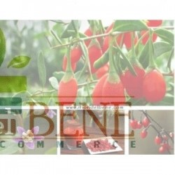 Semi di Lycium Barbarum (Bacche Goji) Dotto Sementi - linea benessere e sapore