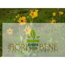 Semi di arnica montana - Dotto Sementi, Linea Benessere e Sapore