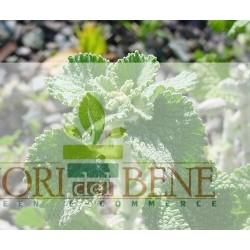 Semi di Marrubio ( Marrubium vulgare ) Dotto Sementi, Linea Benessere e Sapore