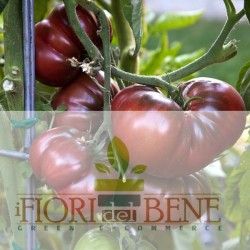 Semi di pomodoro nero di Crimea - Noire de Crimée Dotto Sementi, Linea Benessere e Sapore