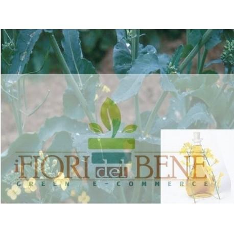 Semi di colza oleifera