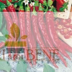 Semi di peperoncino piccante di Cayenna